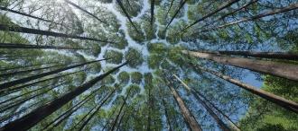 Il legno: tra carenza di materia prima e aumento dei prezzi